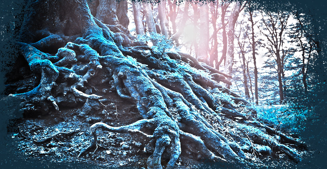 Neagari roots
